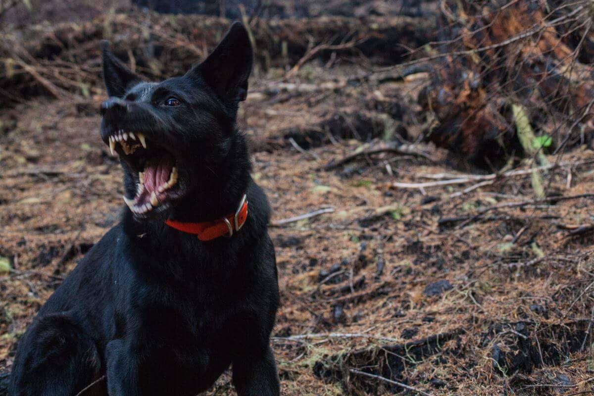 Ugryzł mnie pies, czy należy mi się odszkodowanie?